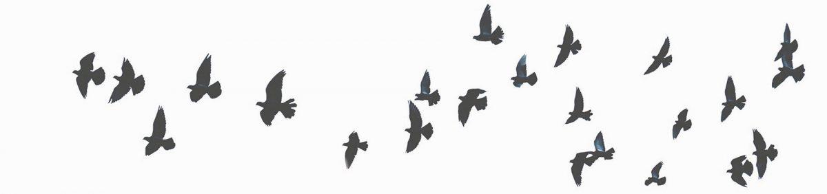Eine Gruppe fliegender Zugvögel